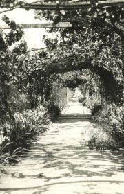 Flowers bloom along the walkway of an arbor at the Scotts' home in Argentina.